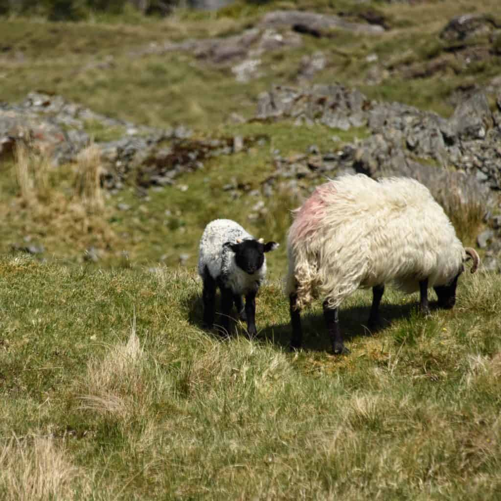 A baby and mama in Connemara in County Galway