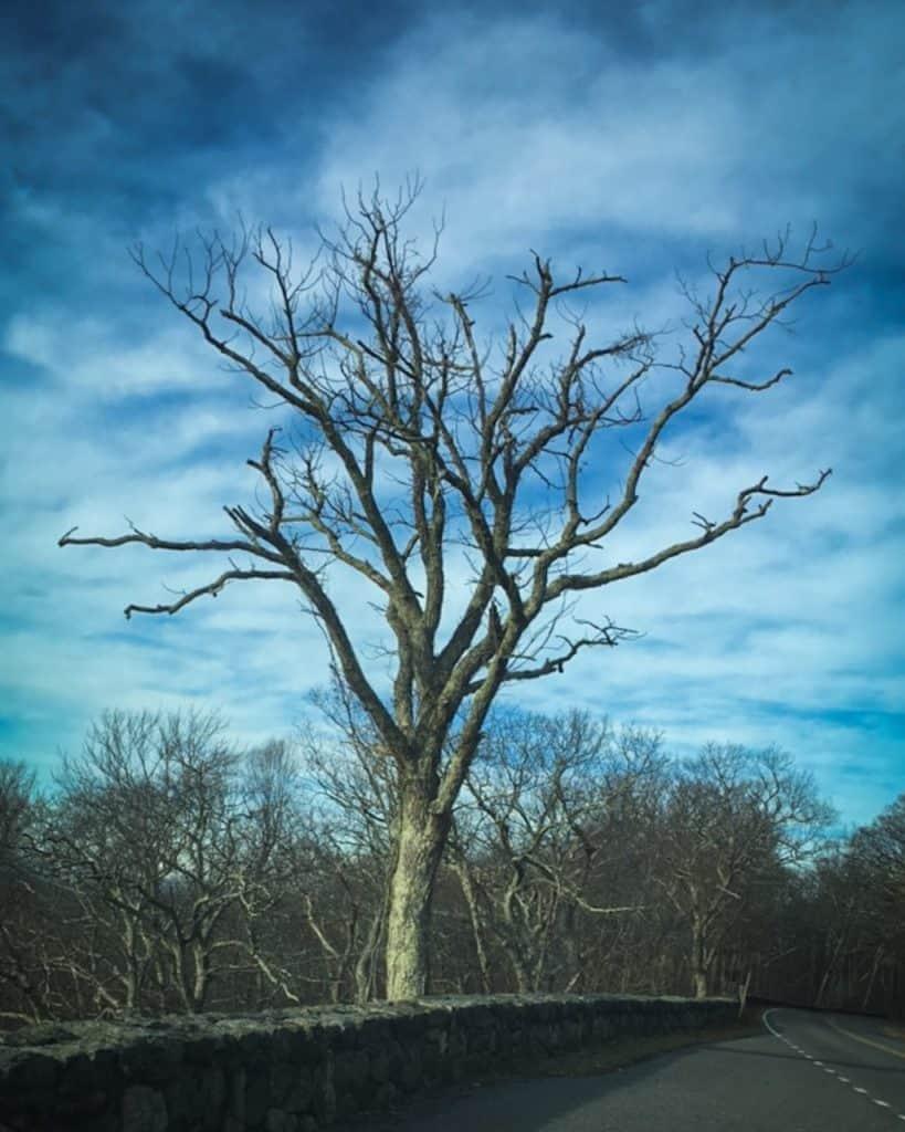 A Naked Tree