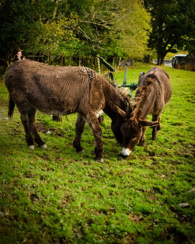 Seriously, these donkeys were awesome.