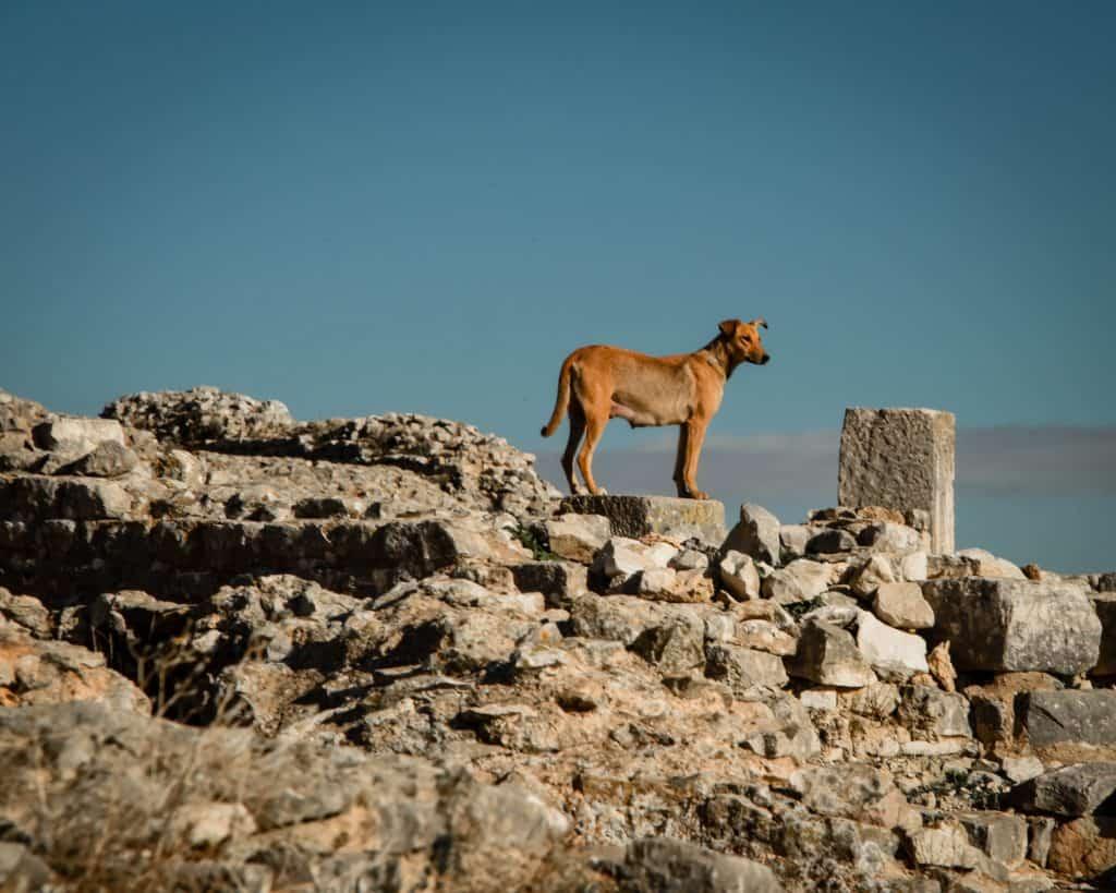 Photographs of Tunisia Historical Sites
