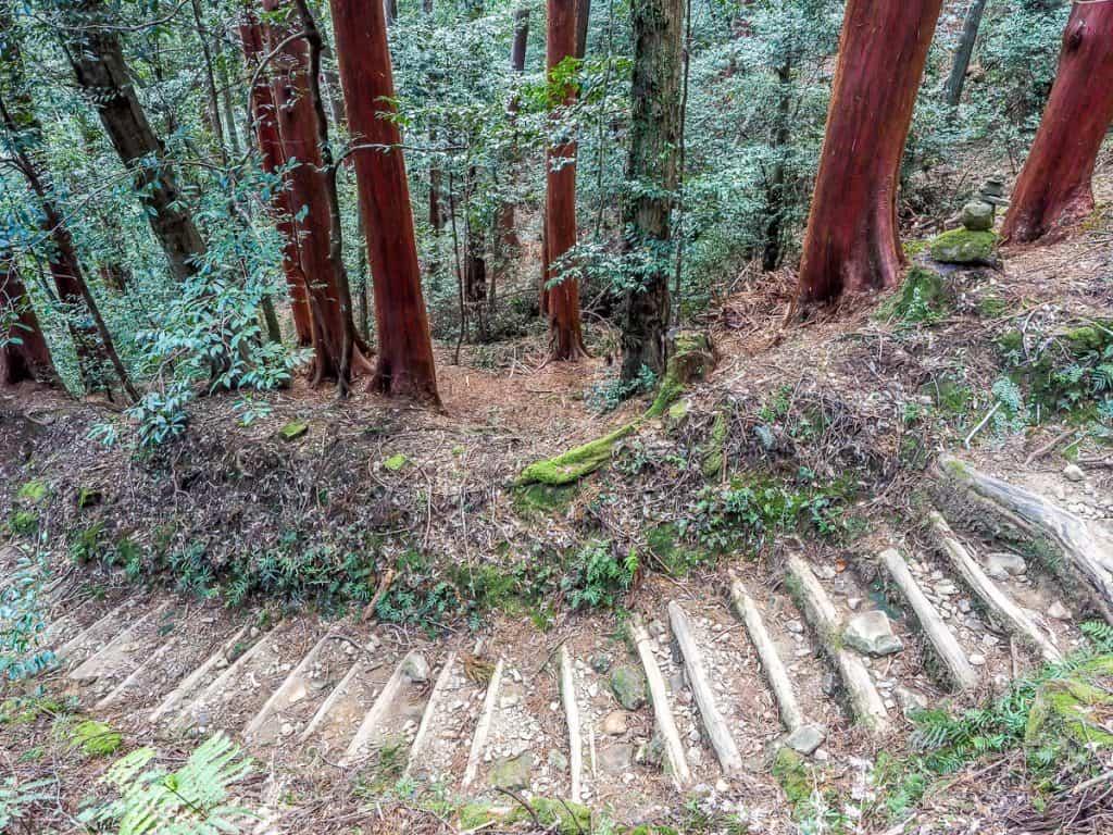 Red Owase Hinoki (cypress) trees on Kumano Kodo