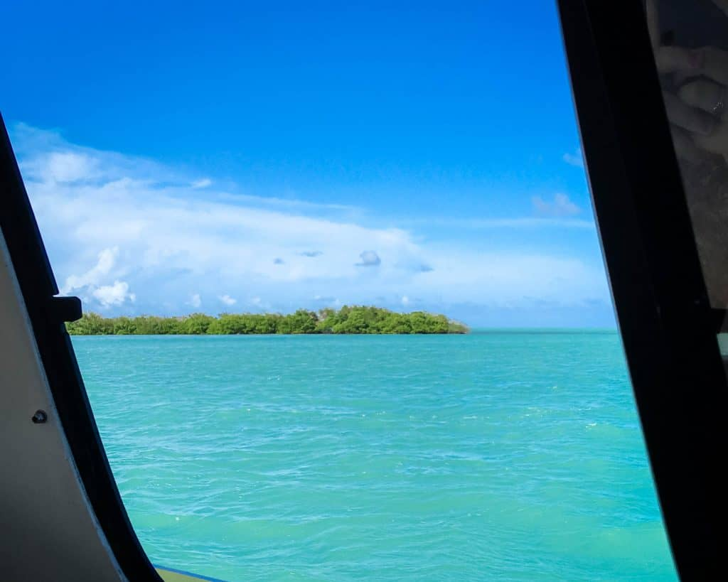 The view from the water taxi of a mangrove island.