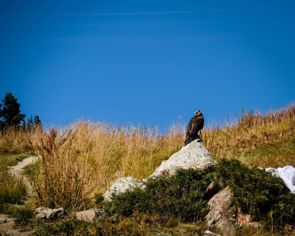 An eagle at Big Almaty Lake