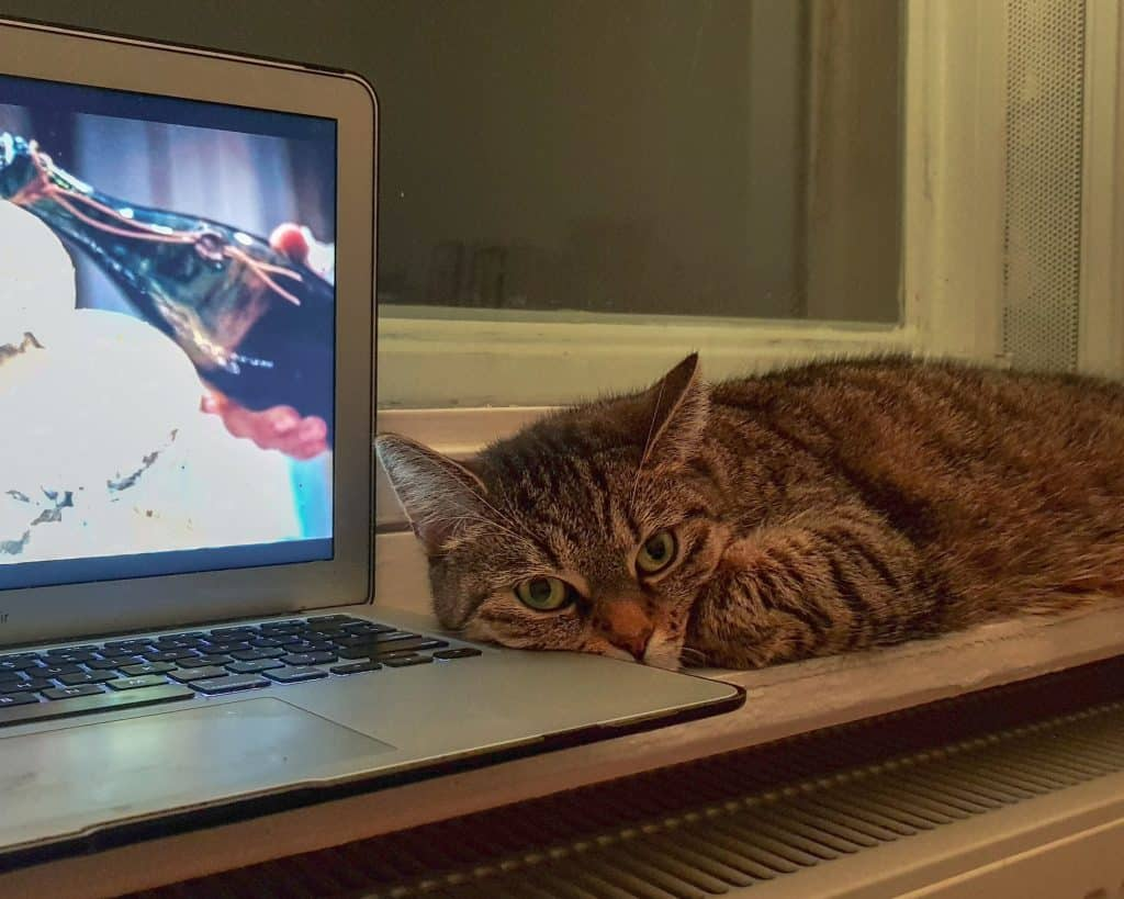 Germany - Berlin - Cat and Laptop