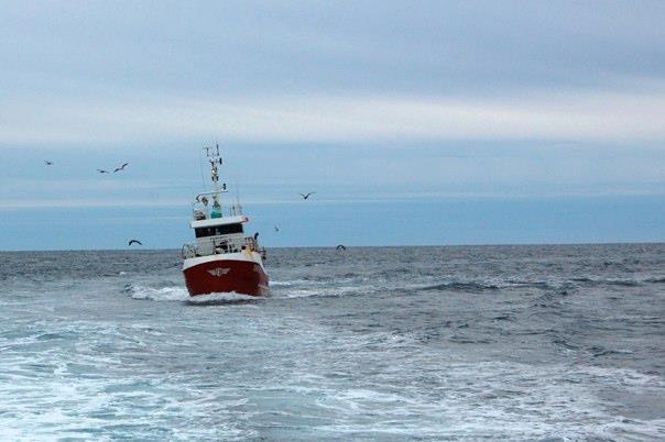 Iceland - Reykjavik - Whale Watching
