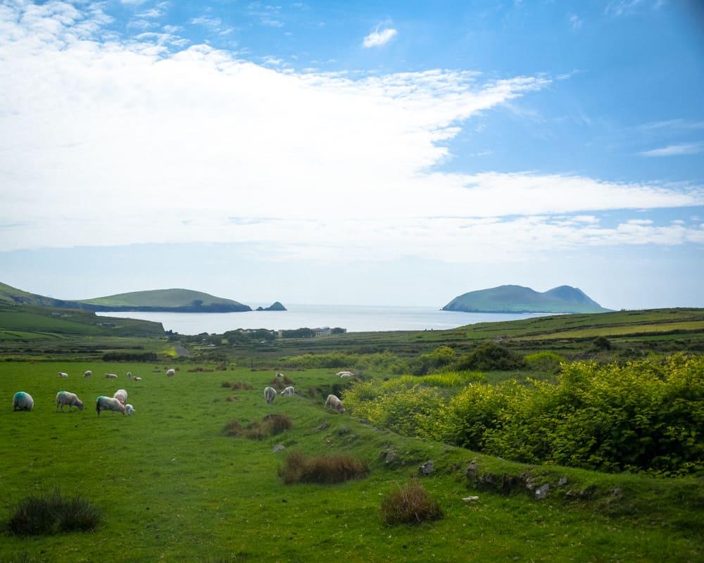 Ireland - Dingle - Slea Head Loop