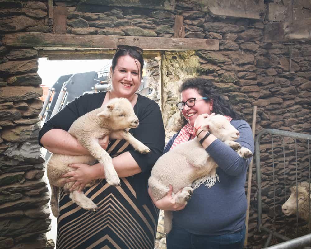 Ireland - Dingle - Holding Lambs