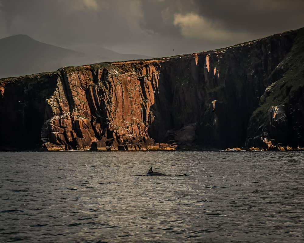 Ireland - Dingle - Fungie the Dolphin