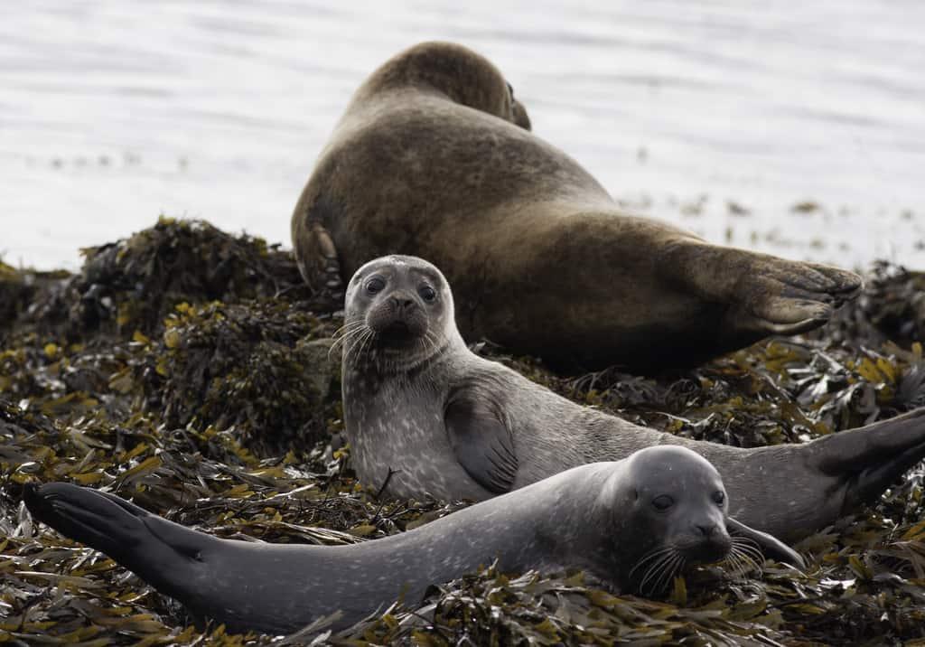 Ireland - Kenmare - Seals at Kenmare Bay shutterstock_672628873 copy
