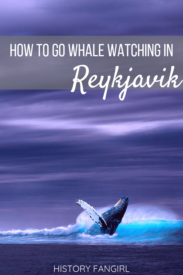 10 Things to Know Before Going Whale Watching in Reykjavik