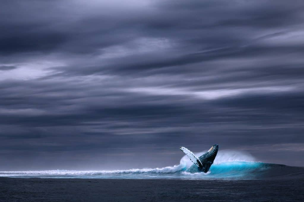 Iceland - Reykjavik - Blue Whale