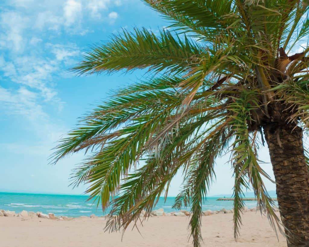 Tunisia - La Marsa - Tunisia Beaches