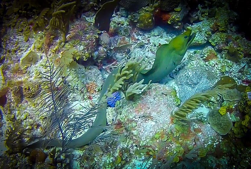 Best Places to Visit in Belize - Belize Barrier Reef System