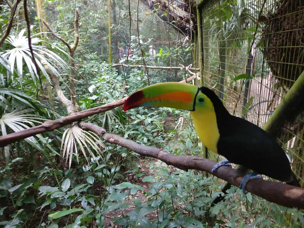 Best Places to Visit in Belize - Belize Zoo