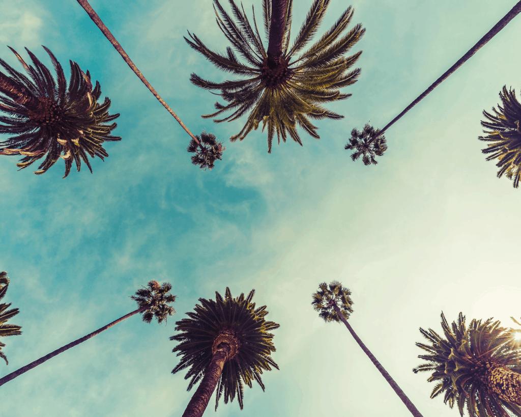 California - Los Angeles - Renting a Car in Los Angeles