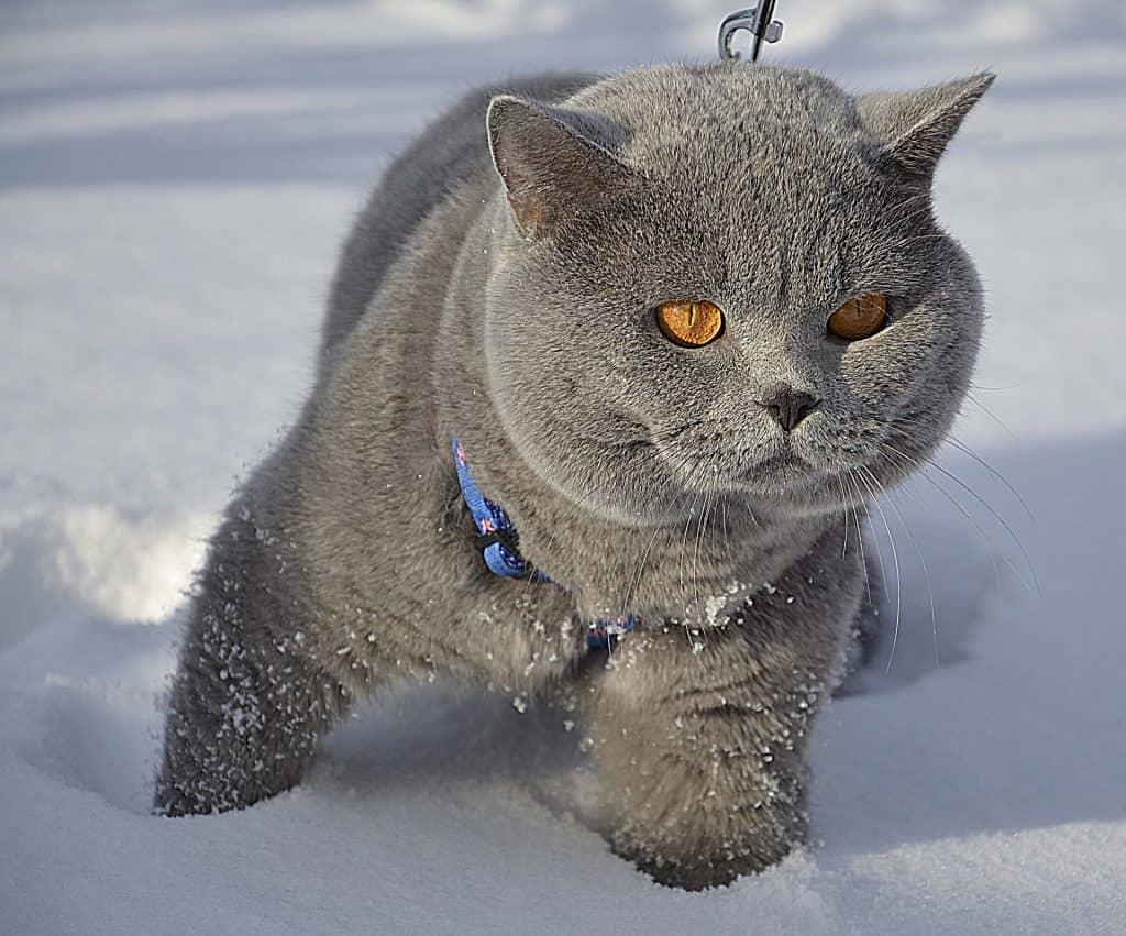 Russia - Cat - Destination Russia