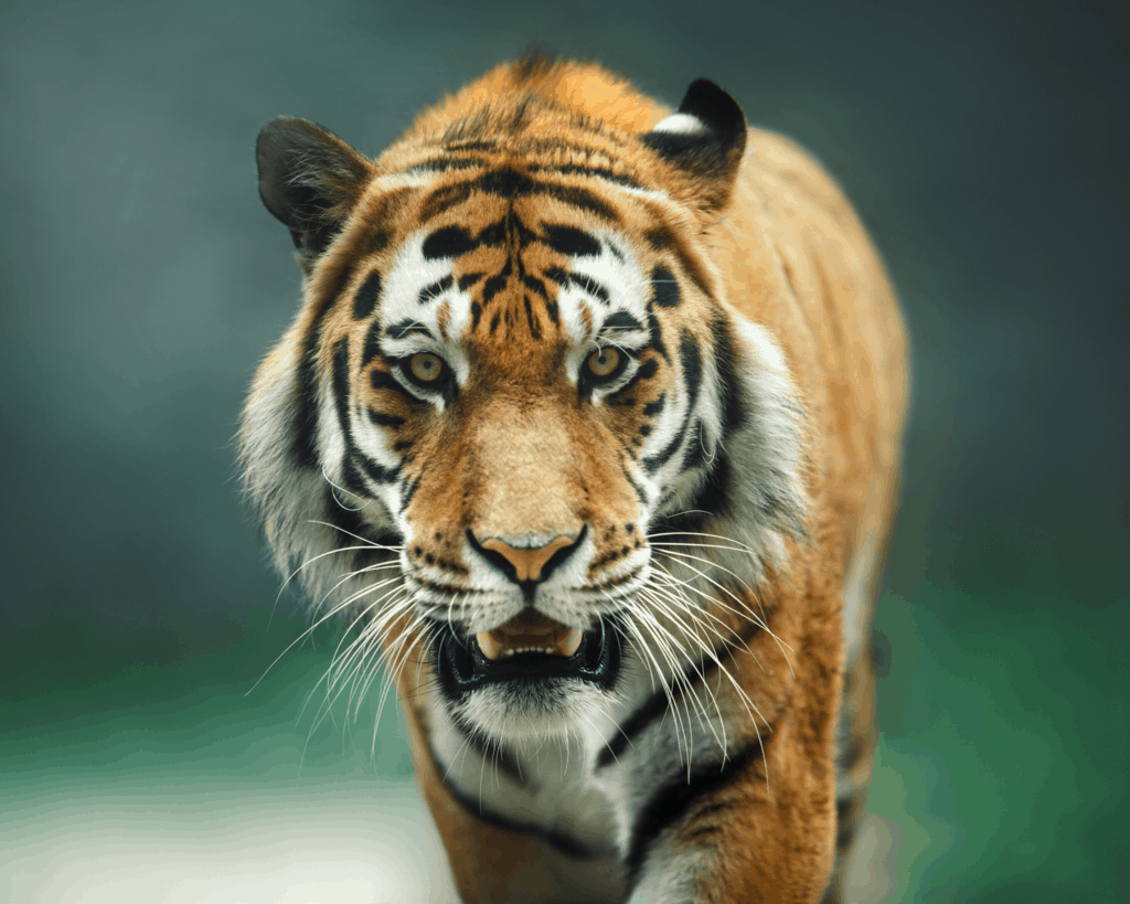 Jokes about Animal Puns for Animal Instagram Captions and Animal WhatsApp Status
