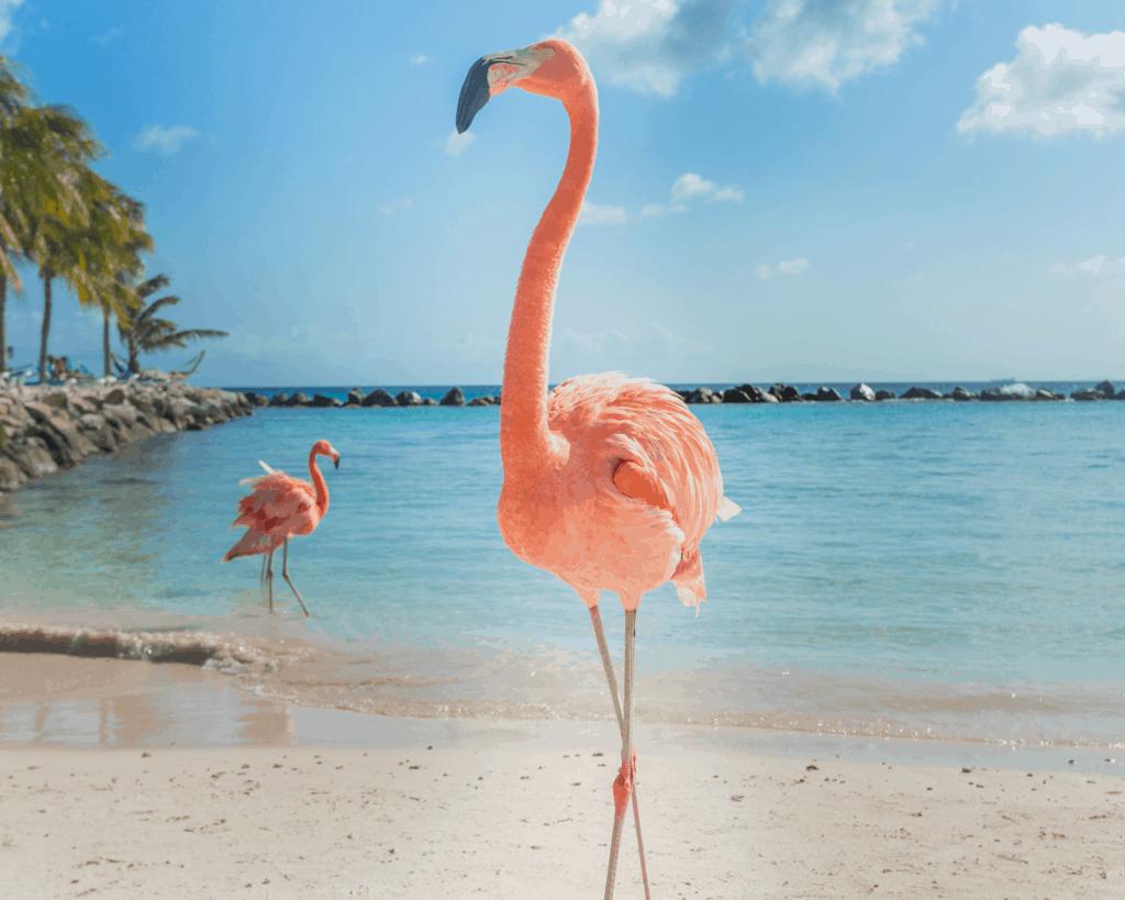 Jokes about Beach Puns for Beach Instagram Captions and Beach WhatsApp Status