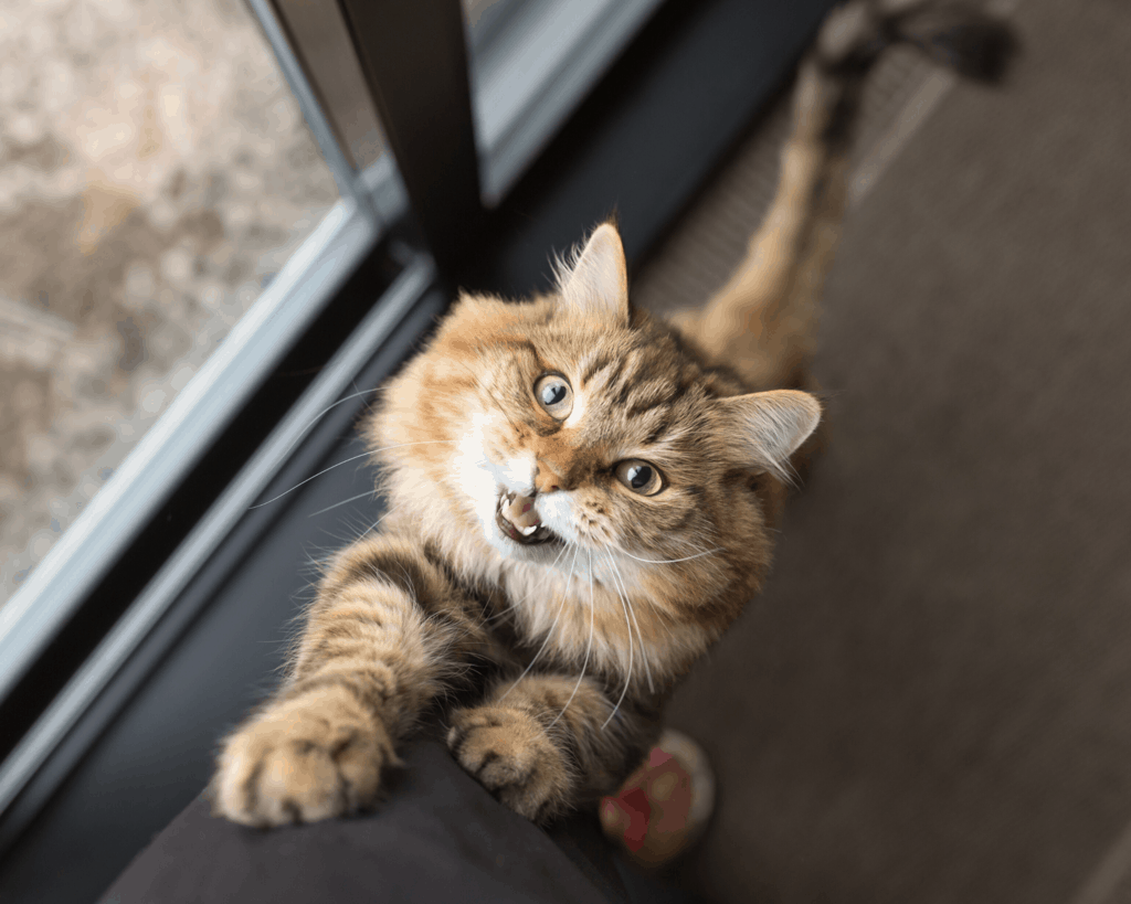 Jokes about Cat Puns for Cat Instagram Captions and Cat WhatsApp Status