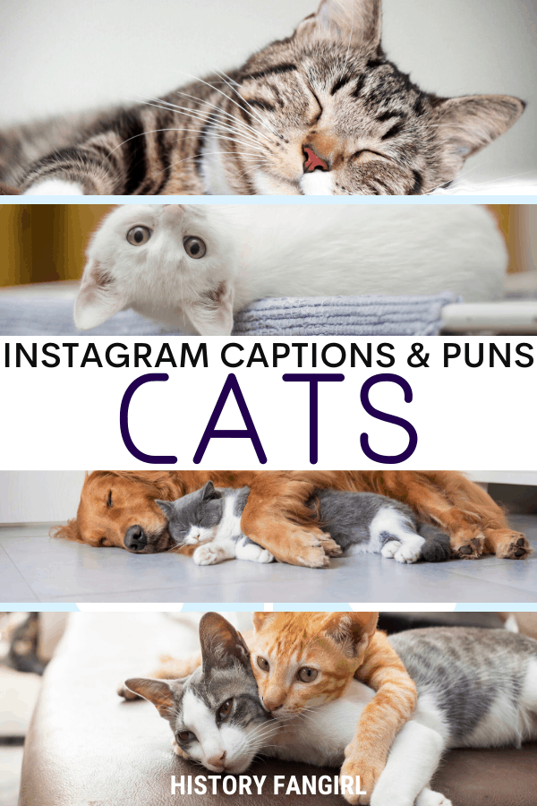 Jokes about Cat Puns for Cat Instagram Captions and Cat WhatsApp Status Kitten Puns