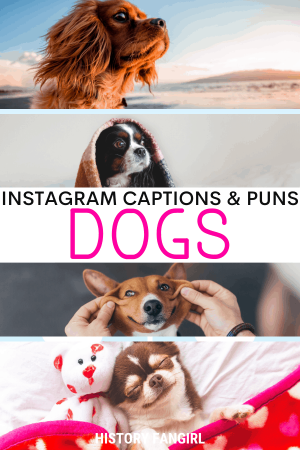 Jokes about Dog Puns for Dog Instagram Captions and Dog WhatsApp Status