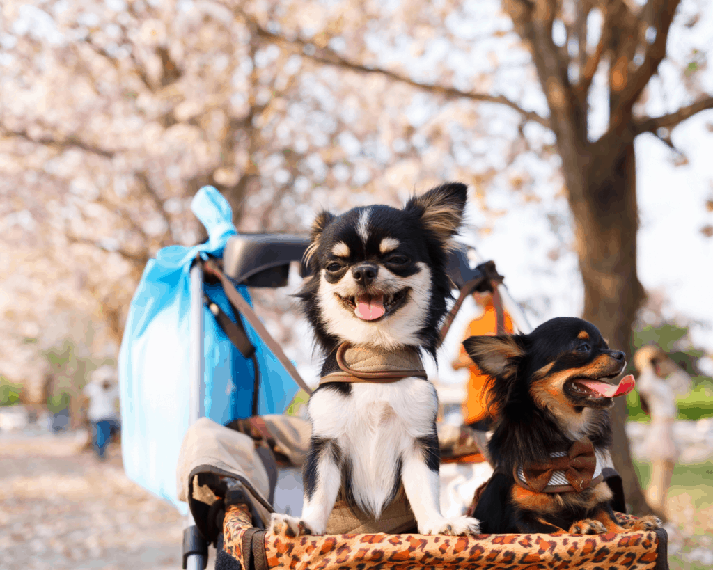 Jokes about Dogs Puns for Dog Instagram Captions and Dog WhatsApp Status