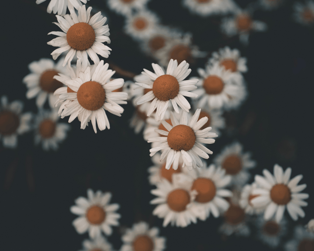 Jokes about Flower Puns for Flower Instagram Captions and Flower WhatsApp Status