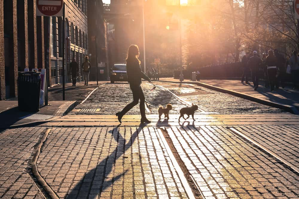 United States - New York - The woman take a walk with dogs at sunset on Brooklyn street, New York City, USA