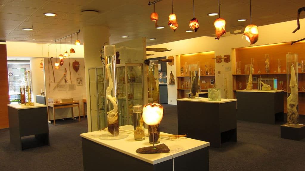 Iceland - Reykjavik - Phallological Museum
