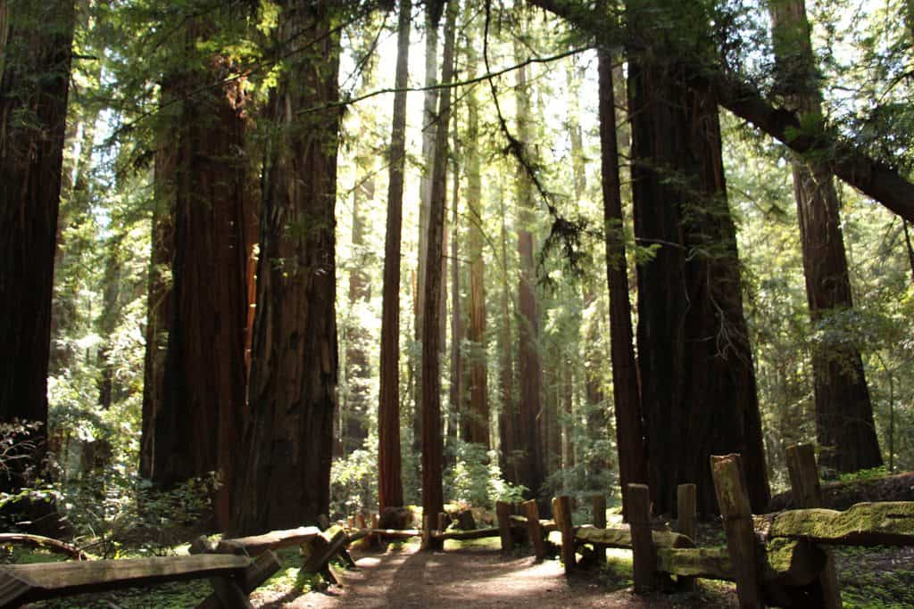 California - Redwoods - Scenic Drives in the USA