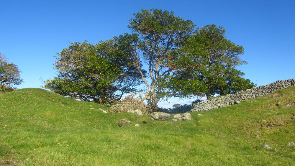 A tree in a field. Taken at otuataua stonefields in Manukau New Zealand.