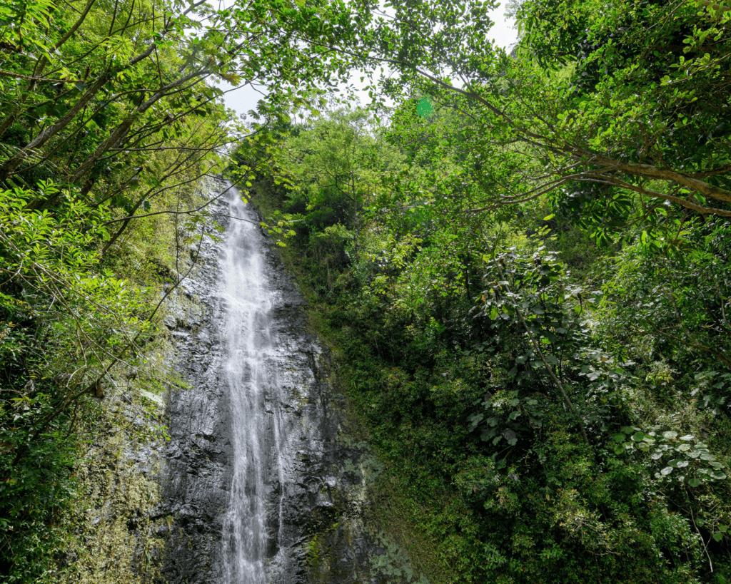 USA - Manoa Falls (Hawaii)