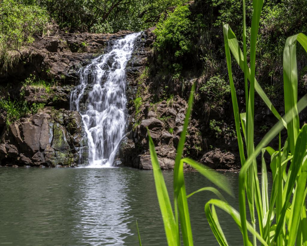 USA - Waimea Falls (Hawaii)