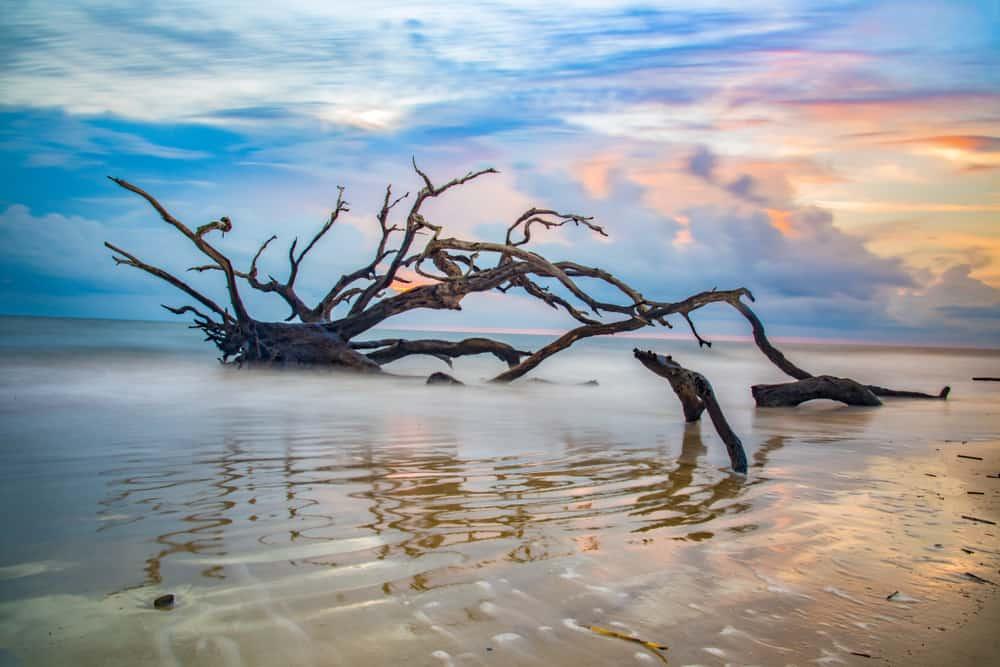 USA - Georgia - Driftwood Beach sunrise in Jekyll Island, Georgia, GA, USA.