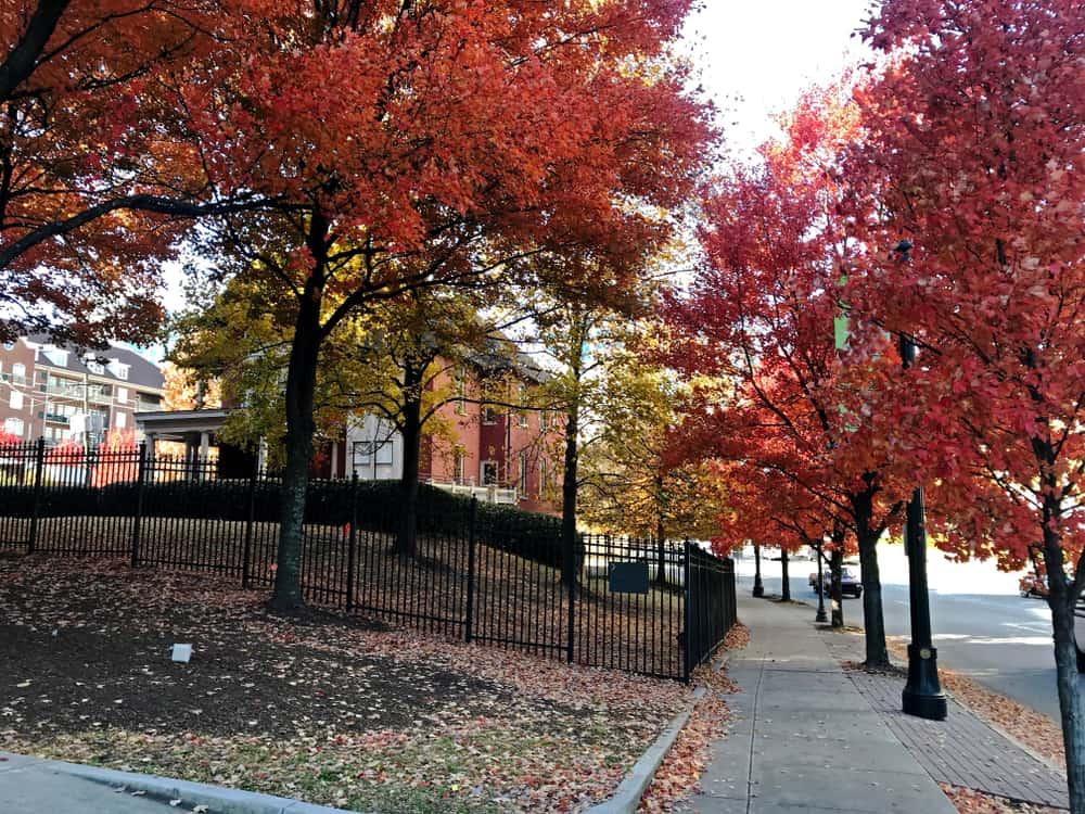 Georgia - Atlanta - Colorful autumn trees near the Margaret Mitchell House. Atlanta, GA.