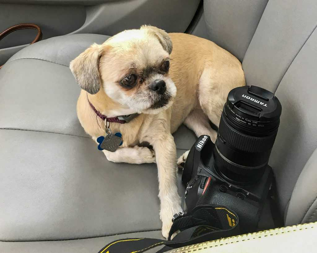 Travel with your dog - Lucy - Car