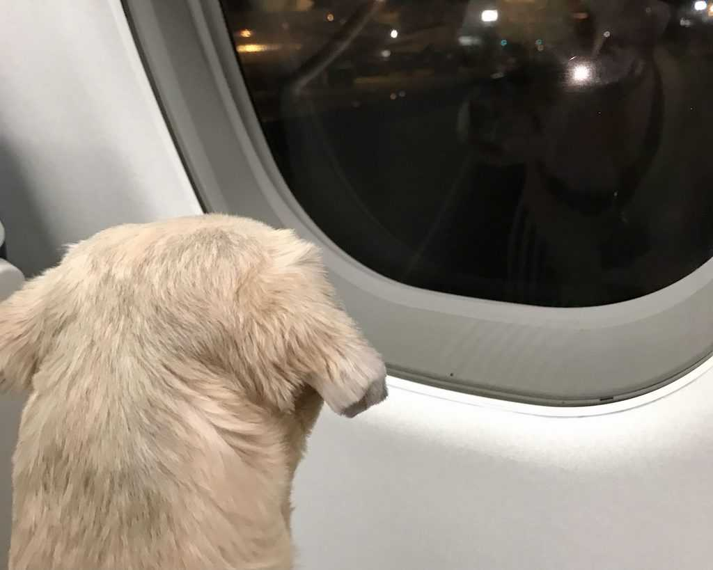 Travel with your dog - Lucy - Plane