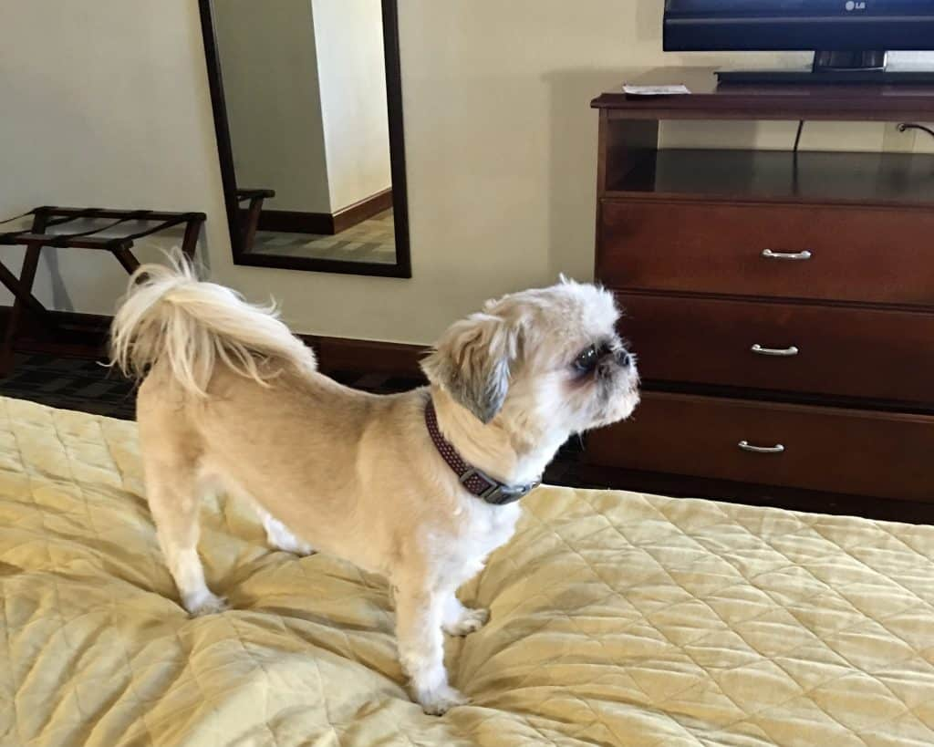 Travel with your dog - Lucy - Hotel