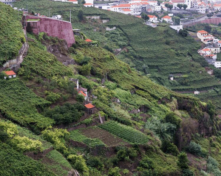 Portugal - Madeira - Madeira Island Vineyard